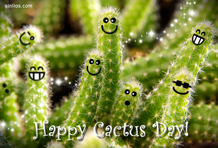 Happy cactus day!